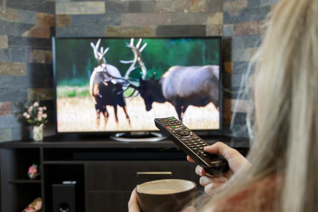 Acara Televisi